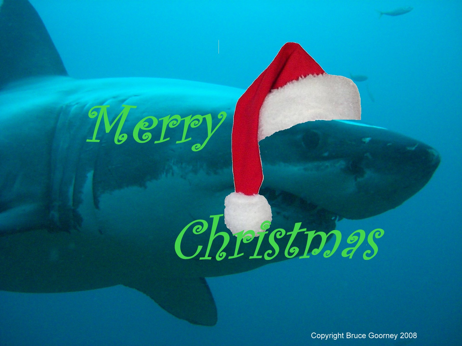 Merry Christmas shark